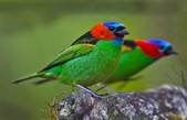 珍奇鳥類 -4-29-2018:012-4-29-011-美圖好文.jpg