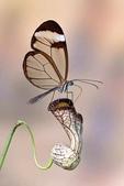 世界蝴蝶大全,終於找齊了,太漂亮了-7-19-2016:640-7-19-010.jpg