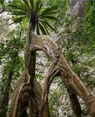 如此神秘的樹,你一定沒見過..-10-25-2015:640-10-24-11.jpg