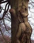 如此神秘的樹,你一定沒見過..-10-25-2015:640-10-24-19.jpg