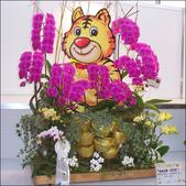 2010 台灣國際蘭展:100_4717-1.jpg