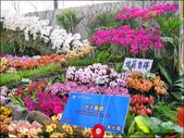 2011台灣國際蘭展 -2:DSCN0281-1.jpg