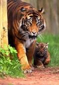 世上最幸福的家,就是爸爸愛媽媽--7-24-2015:640-7-23-20.jpg