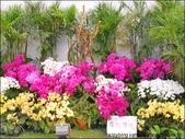 2011台灣國際蘭展 -2:DSCN0292-1.jpg