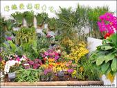 2011台灣國際蘭展 -2:DSCN0290-1.jpg