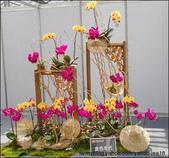 2011台灣國際蘭展 -2:DSCN0303-1.jpg
