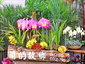 2011台灣國際蘭展-1:DSCN0252-1a.jpg