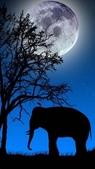 動物剪影 -2-24-2016:2016-02-23_140658-2-24-019.jpg