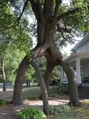 如此神秘的樹,你一定沒見過..-10-25-2015:640-10-24-6.jpg