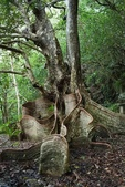 如此神秘的樹,你一定沒見過..-10-25-2015:640-10-24-10.jpg