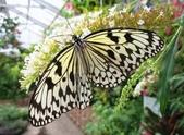 世界蝴蝶大全,終於找齊了,太漂亮了-7-19-2016:640-7-19-024.jpg