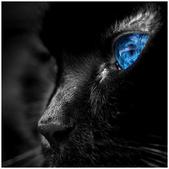 BLUE-1 -9-7-2013:投影片8-1.jpg