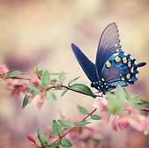 世界蝴蝶大全,終於找齊了,太漂亮了-7-19-2016:640-7-19-016.jpg
