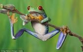 英國攝影師微距下的青蛙 -10-19-2013:securedownload-10-19-16.jpg