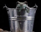 英國攝影師微距下的青蛙 -10-19-2013:securedownload-10-19-4.jpg