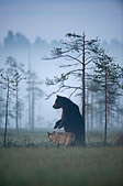 有意思的畫面 (集) -2..8-18-2015:狼熊9-8-19-010.jpg