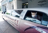 洛杉磯的寵物酒店..12-22-2013:12-22-3.jpg
