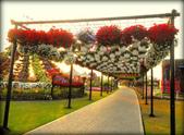 迪拜奇跡花園展覽-10-27-2015:2015-07-04_152839-10-27-7.jpg