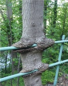 如此神秘的樹,你一定沒見過..-10-25-2015:640-10-24-1.jpg