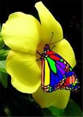 世界蝴蝶大全,終於找齊了,太漂亮了-7-19-2016:640-7-19-01.jpg