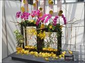 2011台灣國際蘭展 -2:DSCN0300-1.jpg