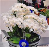 2011台灣國際蘭展-1:DSCN0268-1.jpg