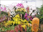2011台灣國際蘭展 -2:DSCN0308-1.jpg