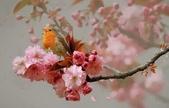 優美的攝影圖片-2-5-2014:2-5-35.jpg