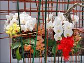 2011台灣國際蘭展 -2:DSCN0297-1.jpg