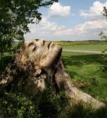 如此神秘的樹,你一定沒見過..-10-25-2015:640-10-24-17.jpg