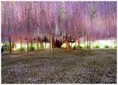 心影-- 日本--9-8-2013:投影片14-1.jpg