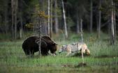有意思的畫面 (集) -2..8-18-2015:狼熊6-8-19-07.jpg