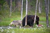 有意思的畫面 (集) -2..8-18-2015:狼熊7-8-19-08.jpg