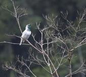 珍奇鳥類 -4-29-2018:018-4-29-017-美圖好文.jpg