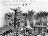 2011台灣國際蘭展 -2:DSCN0289-1.jpg