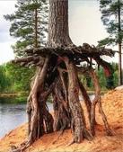 如此神秘的樹,你一定沒見過..-10-25-2015:640-10-24-7.jpg