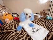 洛杉磯的寵物酒店..12-22-2013:12-22-16.jpg
