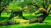 如此神秘的樹,你一定沒見過..-10-25-2015:640-10-24-16.jpg