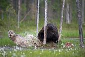 有意思的畫面 (集) -2..8-18-2015:狼熊8-8-19-09.jpg