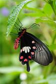 世界蝴蝶大全,終於找齊了,太漂亮了-7-19-2016:640-7-19-02.jpg