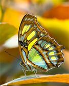 世界蝴蝶大全,終於找齊了,太漂亮了-7-19-2016:640-7-19-03.jpg