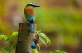 珍奇鳥類 -4-29-2018:021-4-29-020-美圖好文.jpg