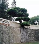 如此神秘的樹,你一定沒見過..-10-25-2015:640-10-24-3.jpg