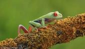 英國攝影師微距下的青蛙 -10-19-2013:securedownload-10-19-6.jpg