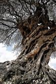 如此神秘的樹,你一定沒見過..-10-25-2015:640-10-24-21.jpg