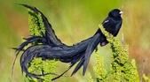 珍奇鳥類 -4-29-2018:003-4-29-02-美圖好文.jpg