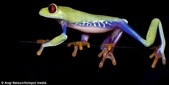 英國攝影師微距下的青蛙 -10-19-2013:securedownload-10-19-8.jpg