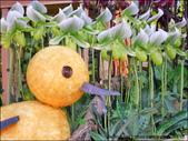 2011台灣國際蘭展 -2:DSCN0283-1.jpg