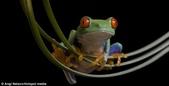 英國攝影師微距下的青蛙 -10-19-2013:securedownload-10-19-3.jpg