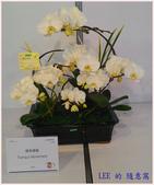 2018台灣國際蘭展照片(3/3~3/12) -3-8-2018:P_20180305_115531-a3.jpg